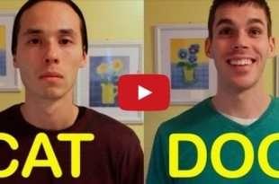 cane vs gatto video divertenti