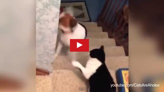 gatti autorevoli, cane non passerai