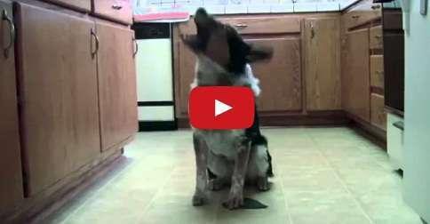 super cane intelligente