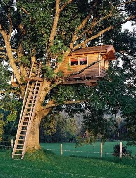 case sugli alberi 35 foto