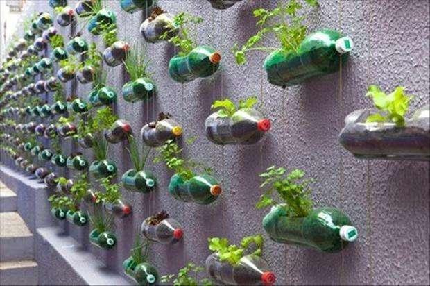 bottiglie di plastica come vasi