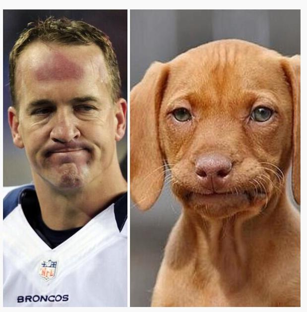 immagini divertenti - faccia del cane e dell'uomo uguali