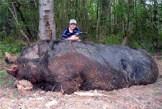 Il maiale più grosso mai fotografato