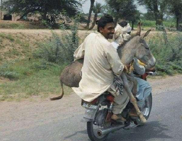 trasporto persone idiote