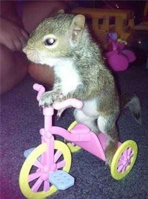 scoiattolo in bicicletta