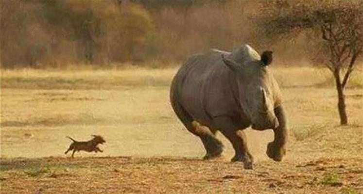 immagini assurde animali