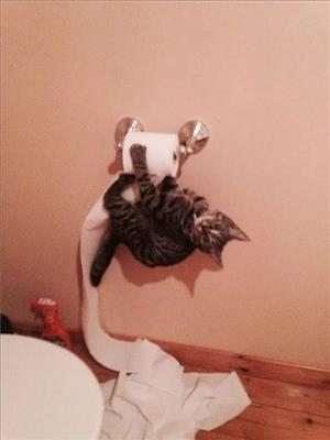 mischievous cats