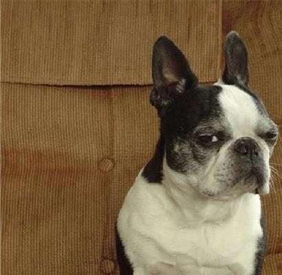 Cani con sguardi sexy