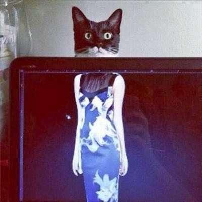 radiografie divertenti animali