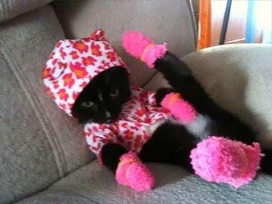 animali con vestiti divertenti