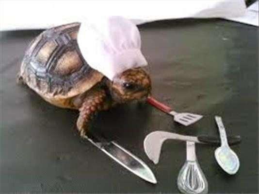 immagini buffe : tartaruga cheef
