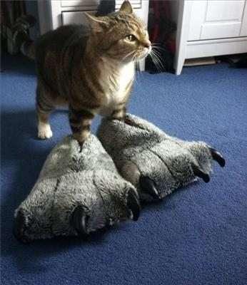 Gatto con pantofole