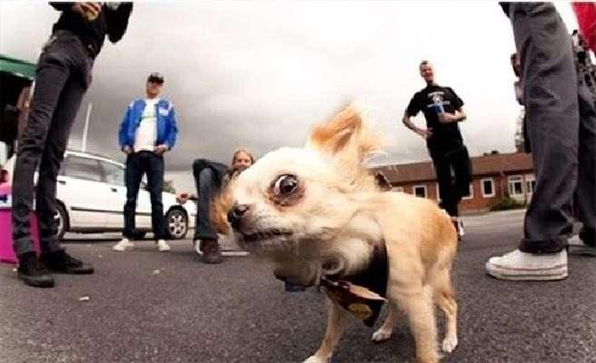 Cani con espressioni divertenti