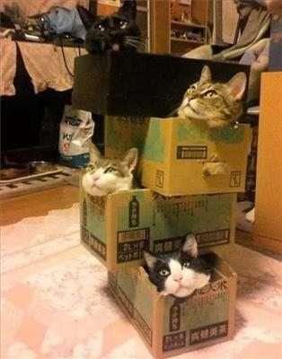 Gatti nelle scatole