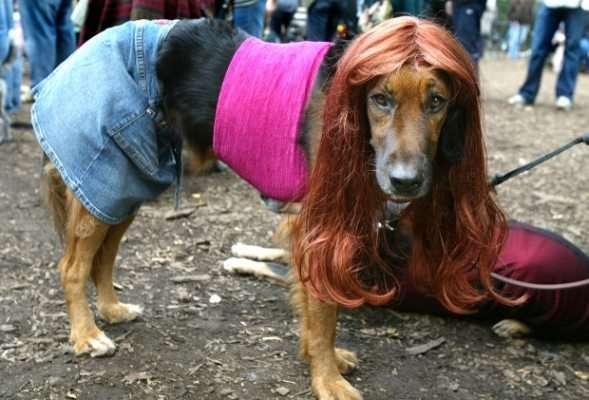 Cane con i capelli