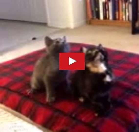 Gattini che ballano muovondo la testa a tempo di musica