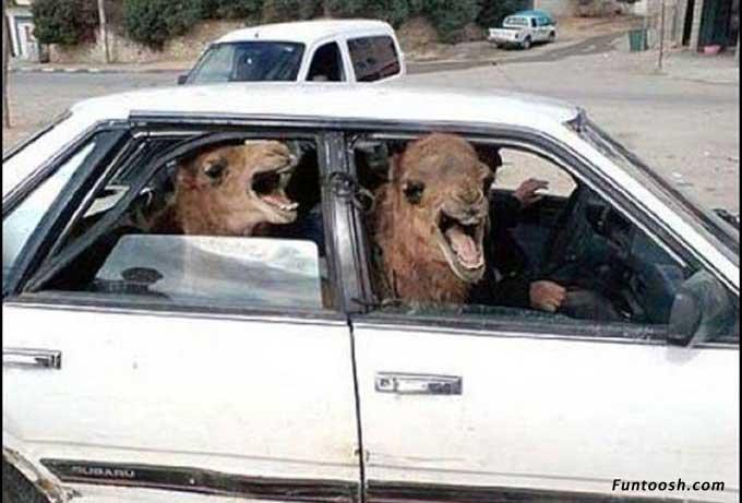 transportation fun