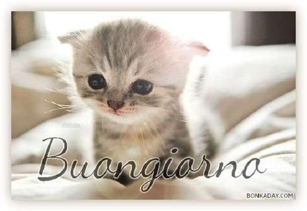 Buongiorno dolce con gattino