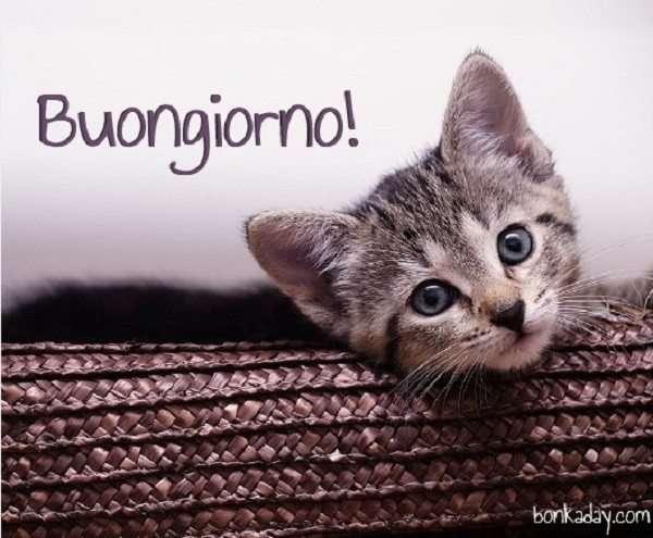 Immagini buongiorno con Gatto
