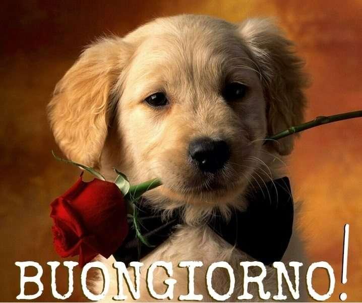 Buongiorno amore - cucciolo con rosa