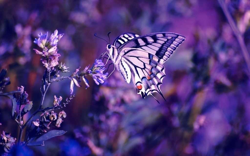 Immagini belle per sfondi desktop 48 foto for Immagini farfalle per desktop