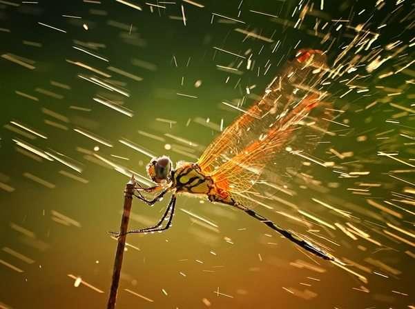 formica con gocce d'acqua vista in macro