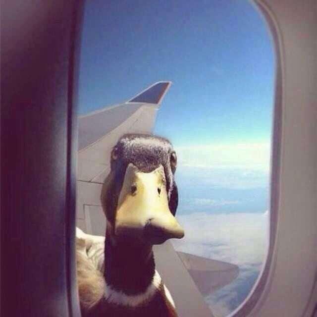 immagini divertenti in aereo al finestrino