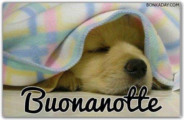 Immagini Buonanotte 45 Foto Bonkadaycom