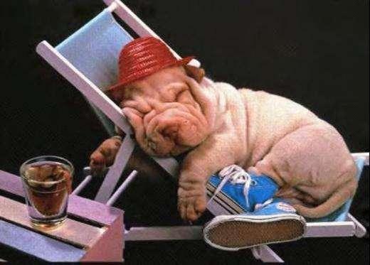 cani che dormono come umani