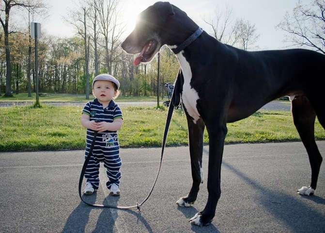 cani grandi con un bambino