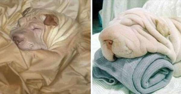 Animali immagini originali - Cani e gatti che si mimetizzano
