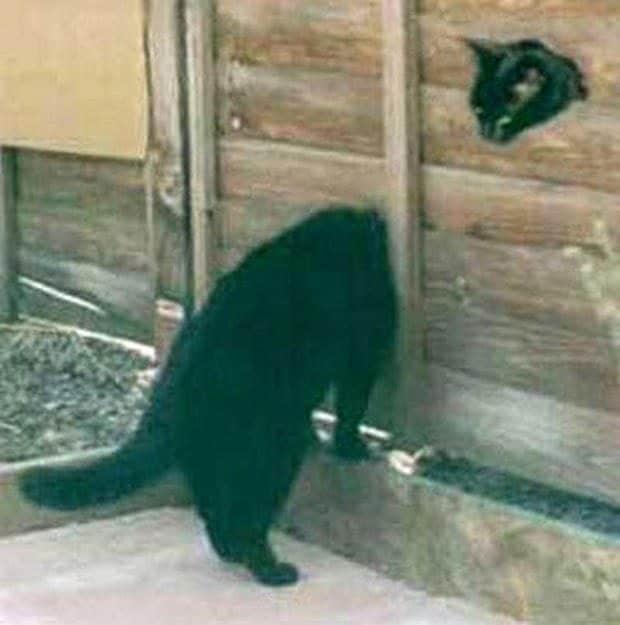 Il gatto con il collo lungo