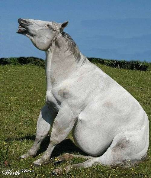 Cavallo grasso e ciccione