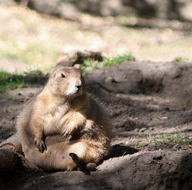 Animali grassi (3)