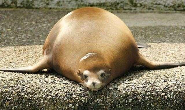 Animali grassi (6)