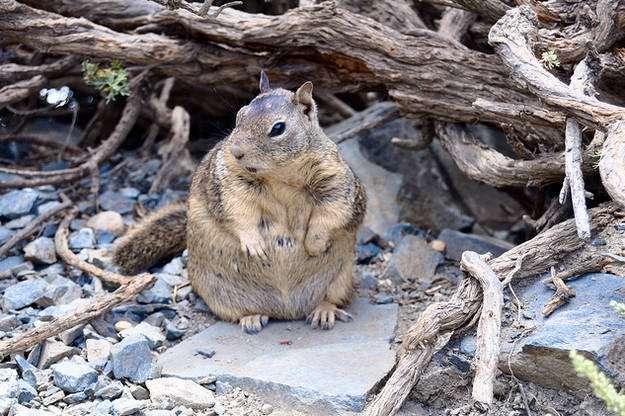 Animali grassi (9)