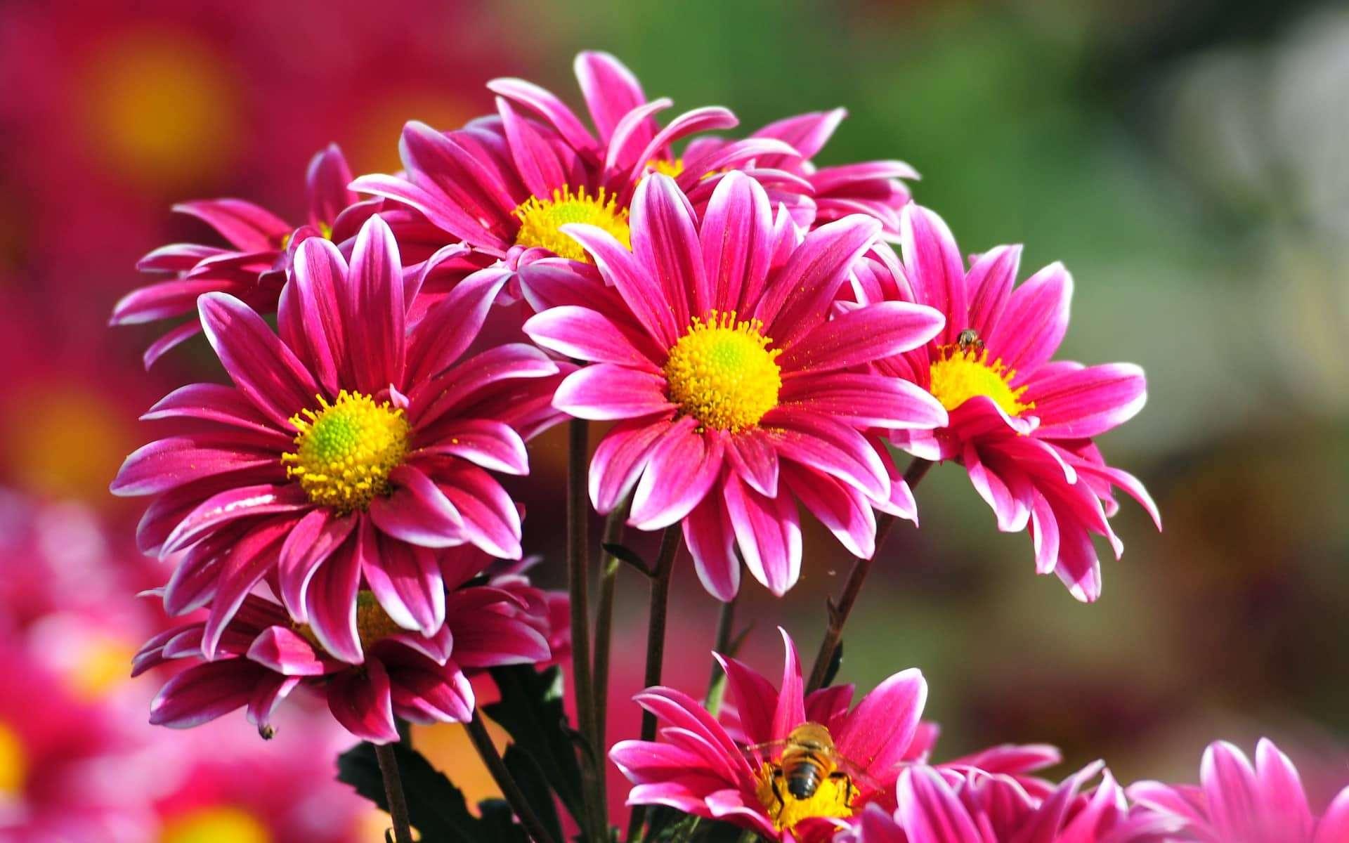 sfondi fiori