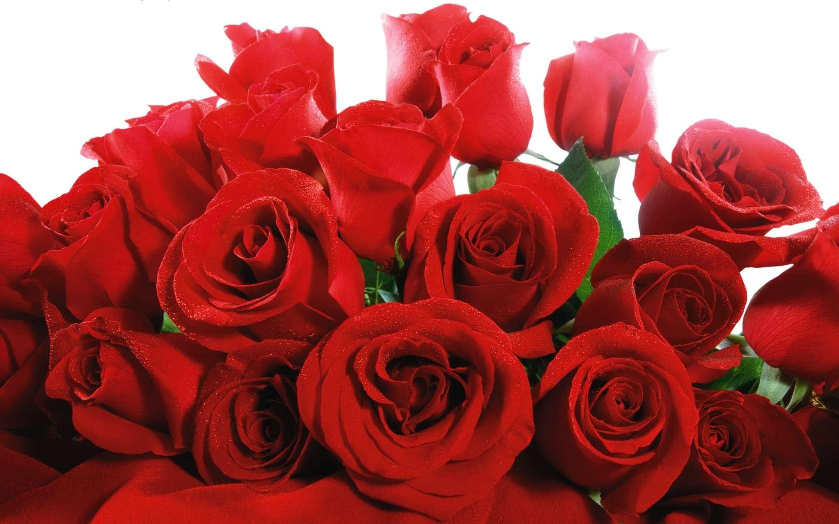 Mazzo di rose HD