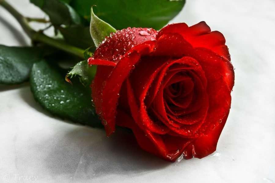 Immagini macro rosa