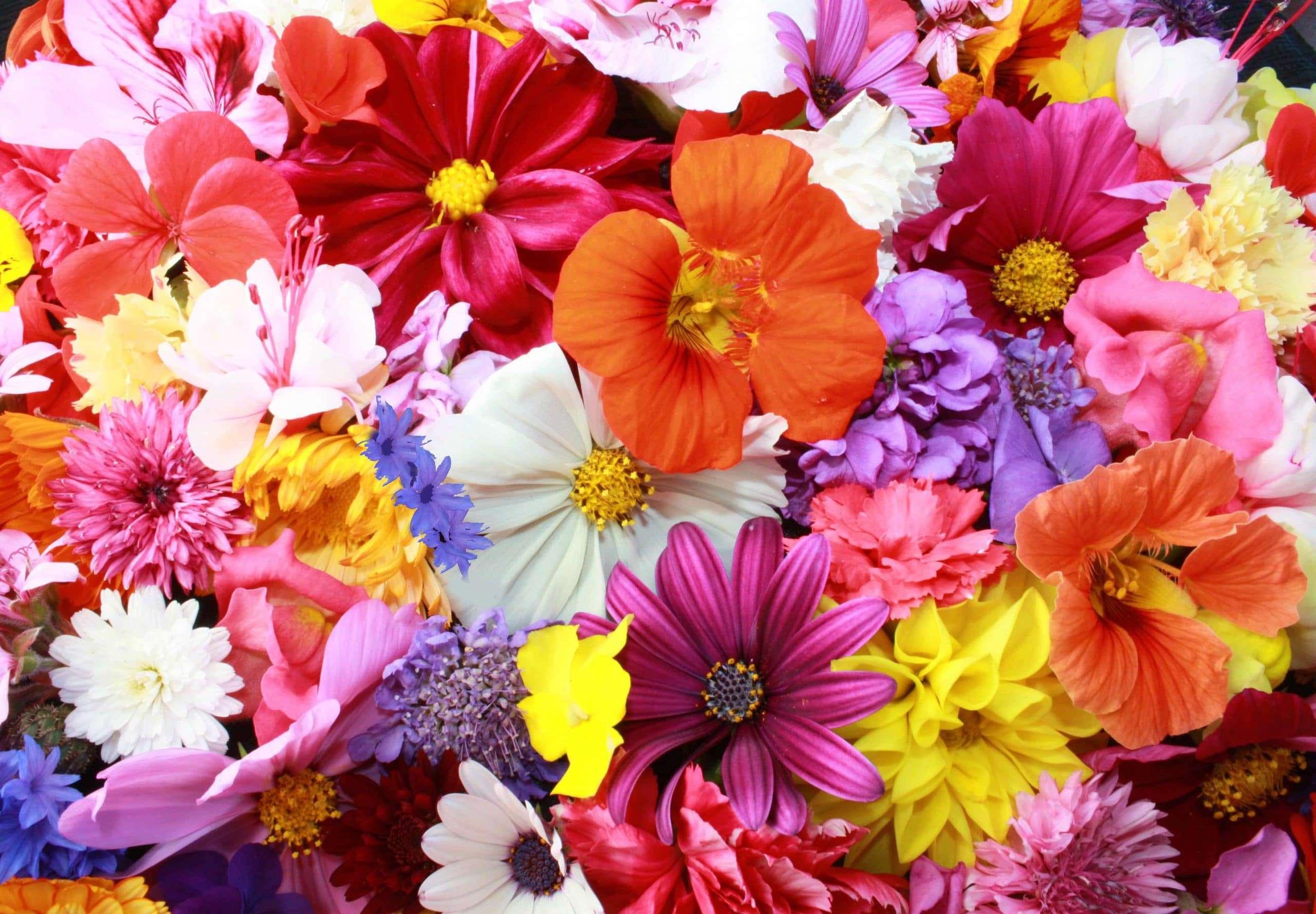 Immagini belle di fior