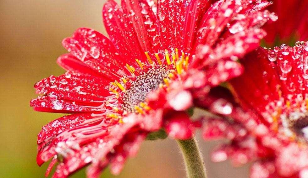 Immagini belle di fiori