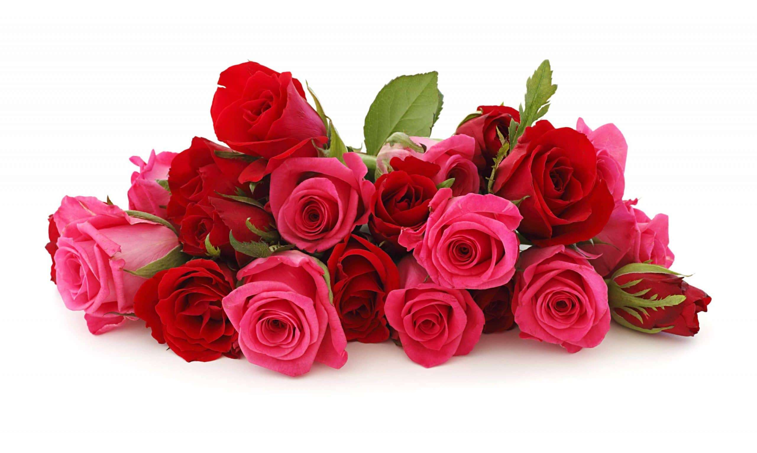sfondi rose rosse