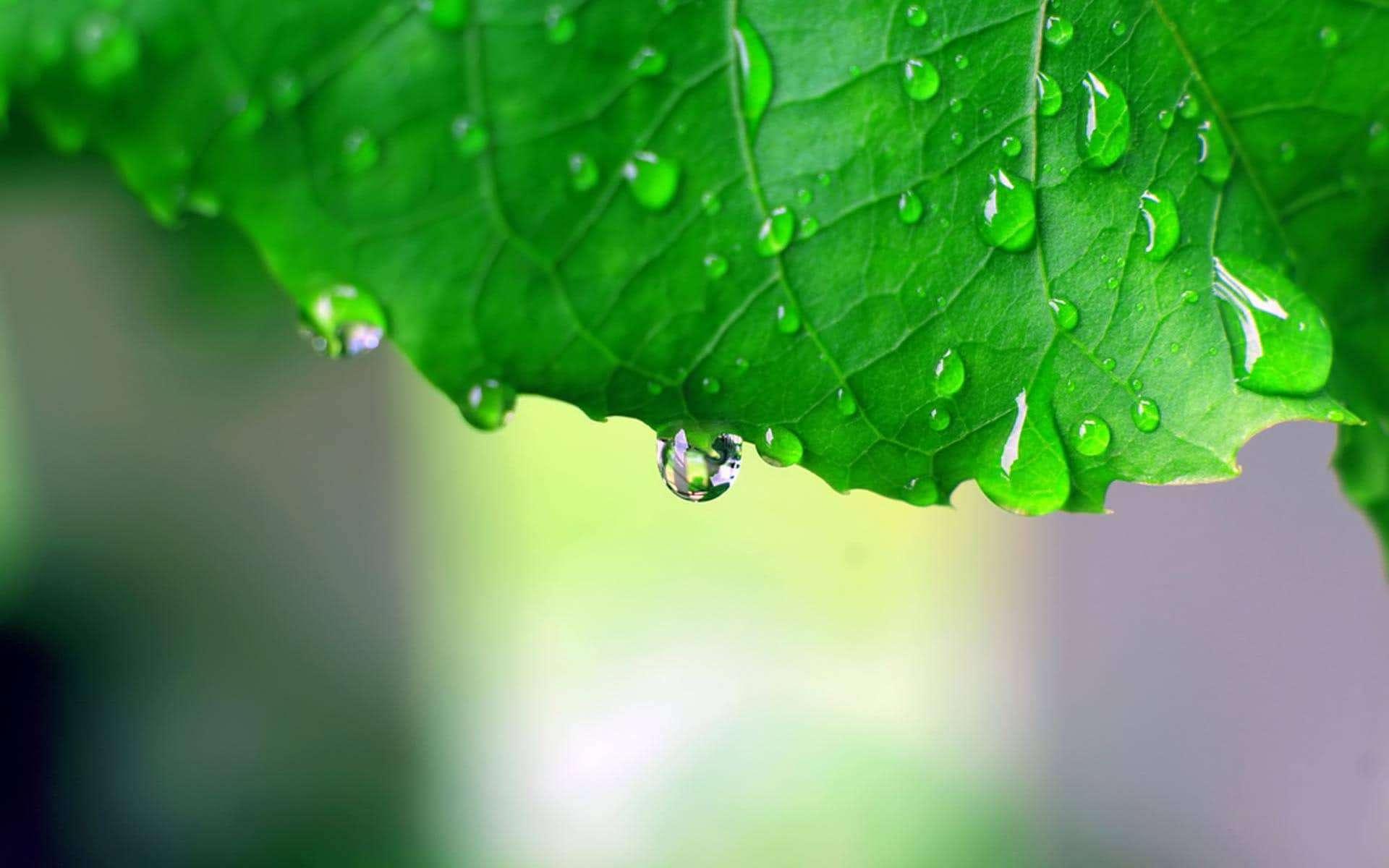 Gocce di pioggia foglia