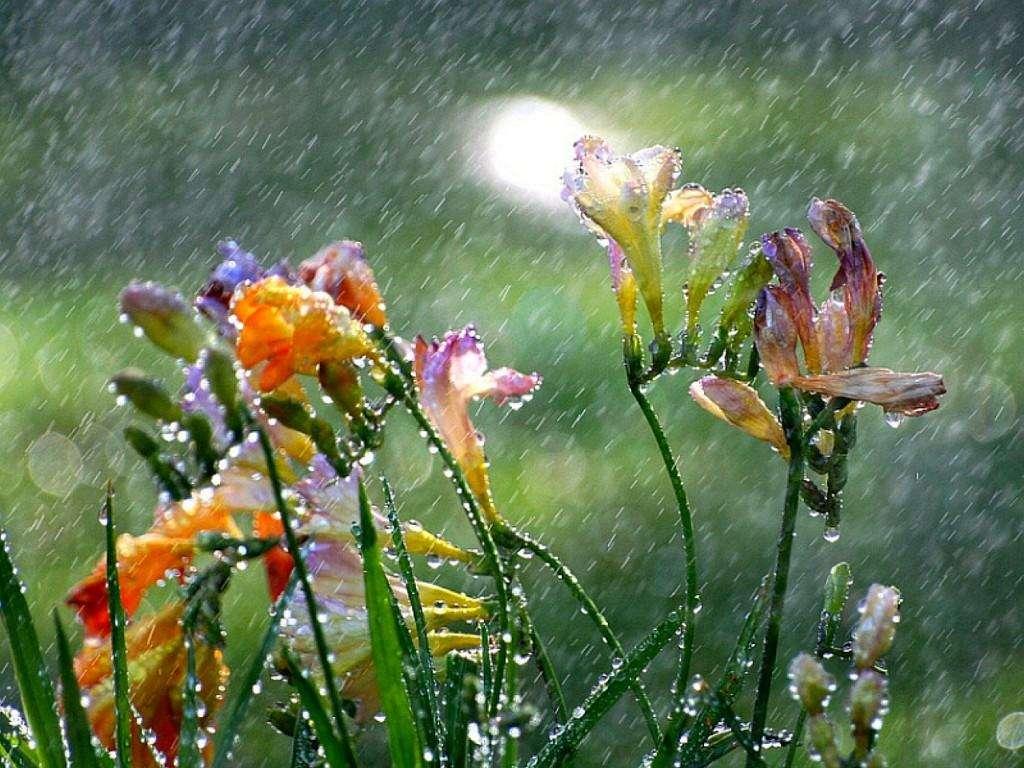 fiori pioggia