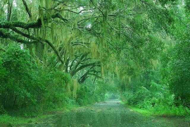 Bellissime fotografie - La pioggia in mezzo alla Natura HD