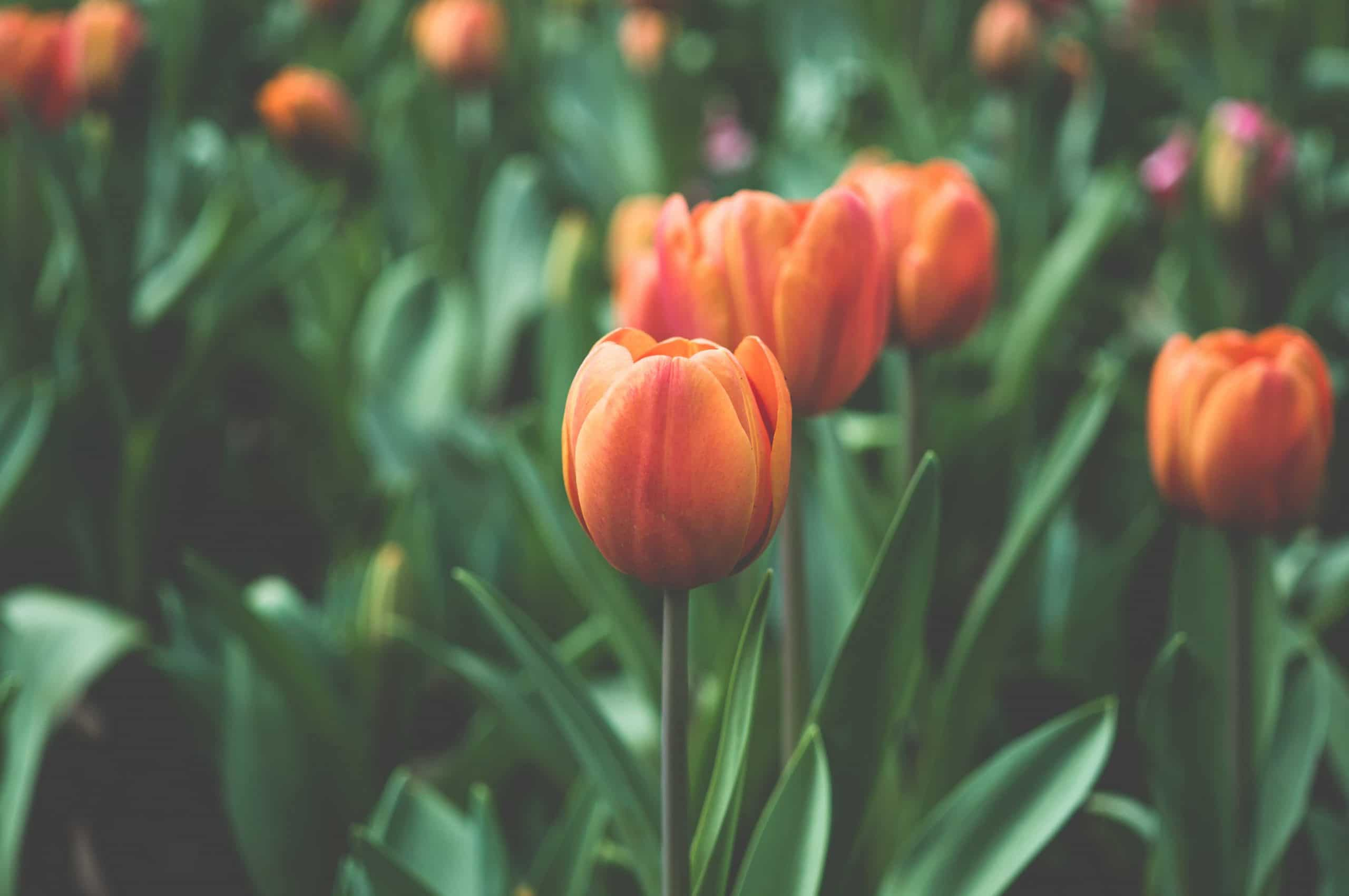 fiori Tumblr