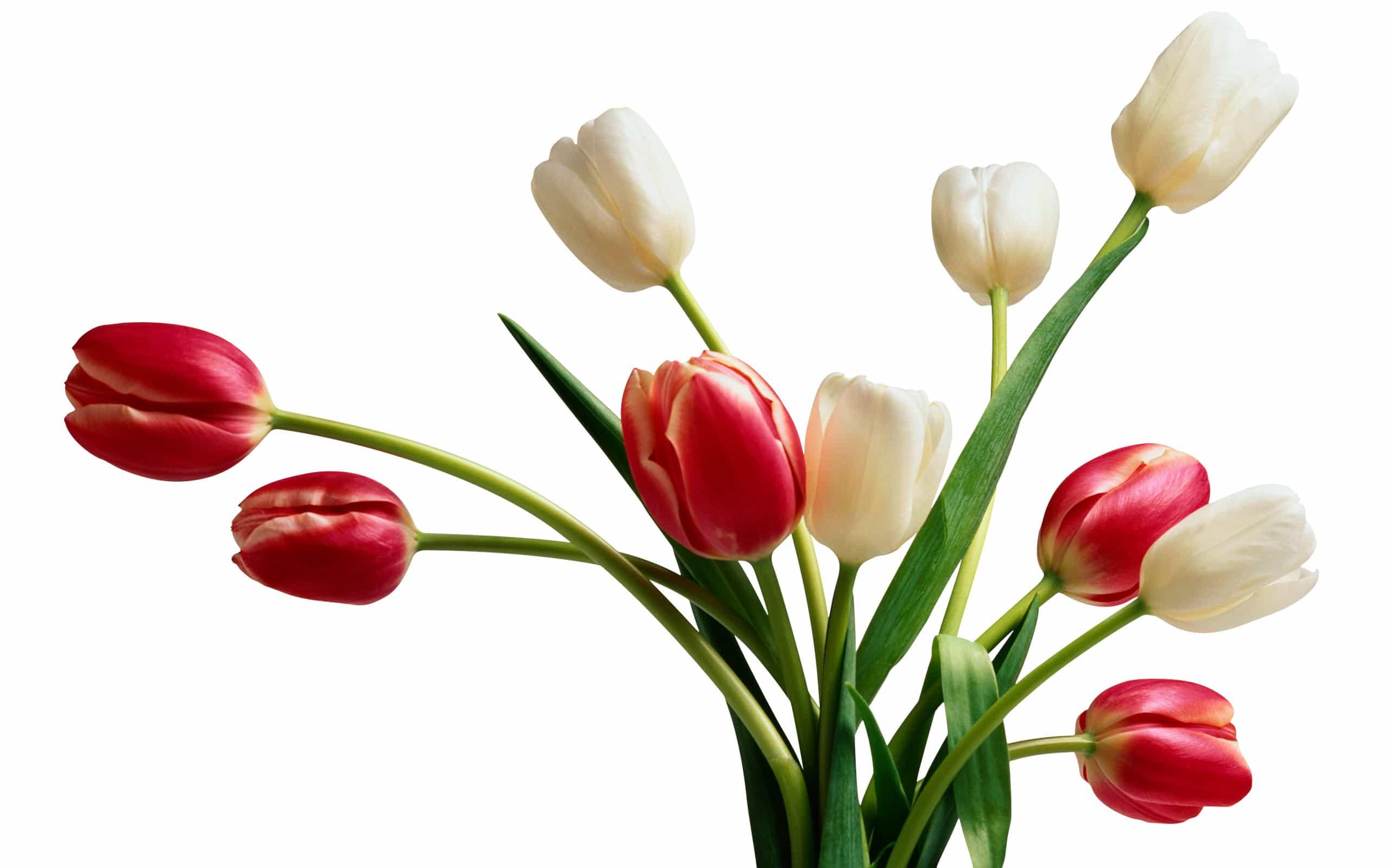 Sfondi con fiori