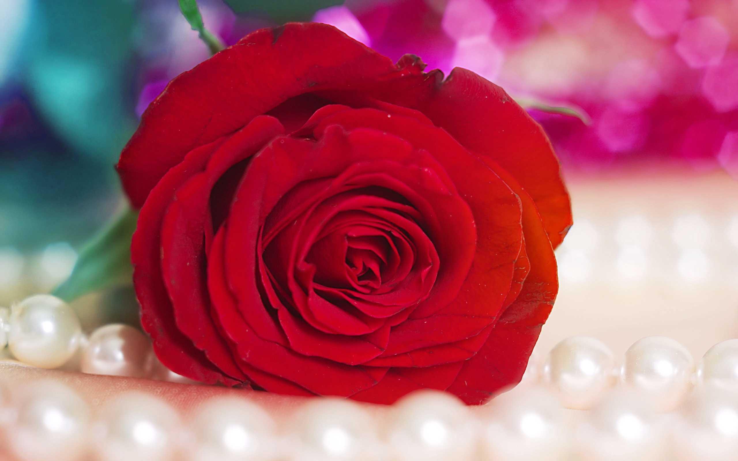 Immagini Rose Rosse Sfondi Hd 45 Foto Bonkadaycom