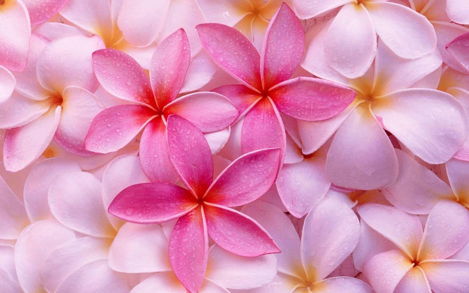 Stupendi fiori sfondi