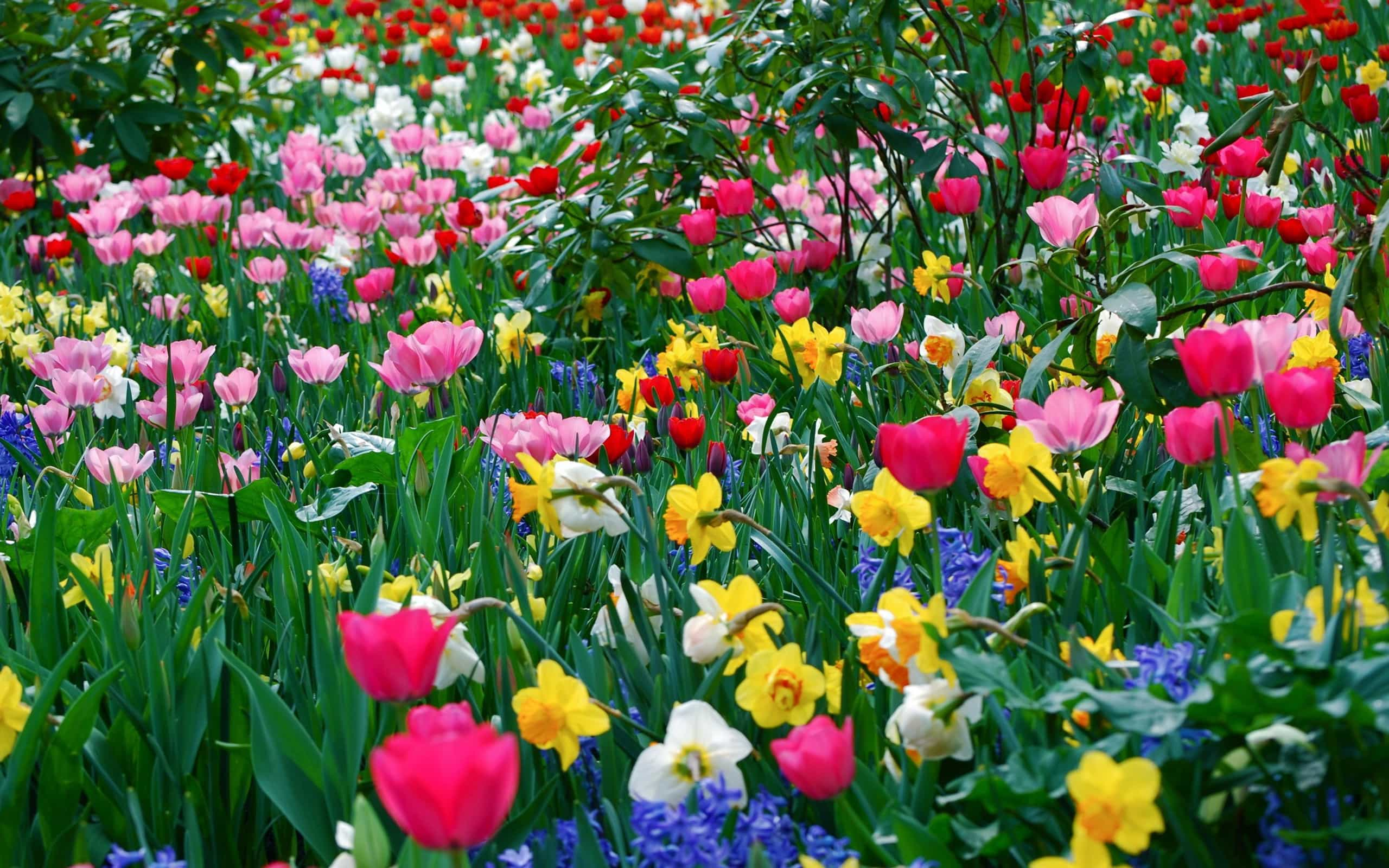 immagini belle di fiori 47 foto sfondi hd